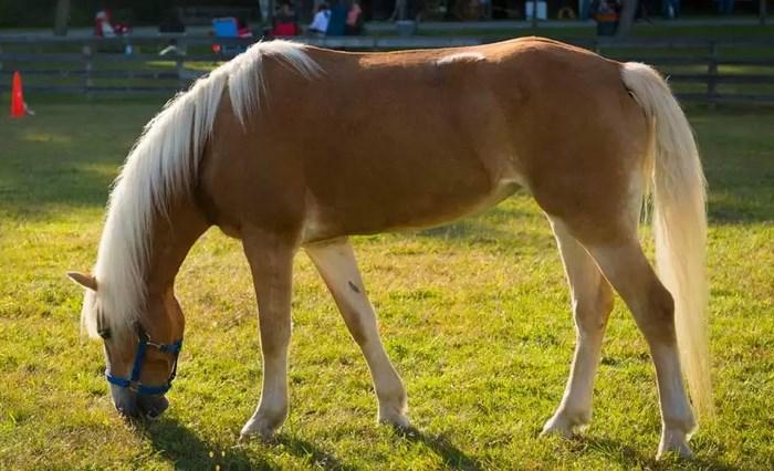 Արդուկը մաքրելու ամենապարզ և արդյունավետ միջոցները